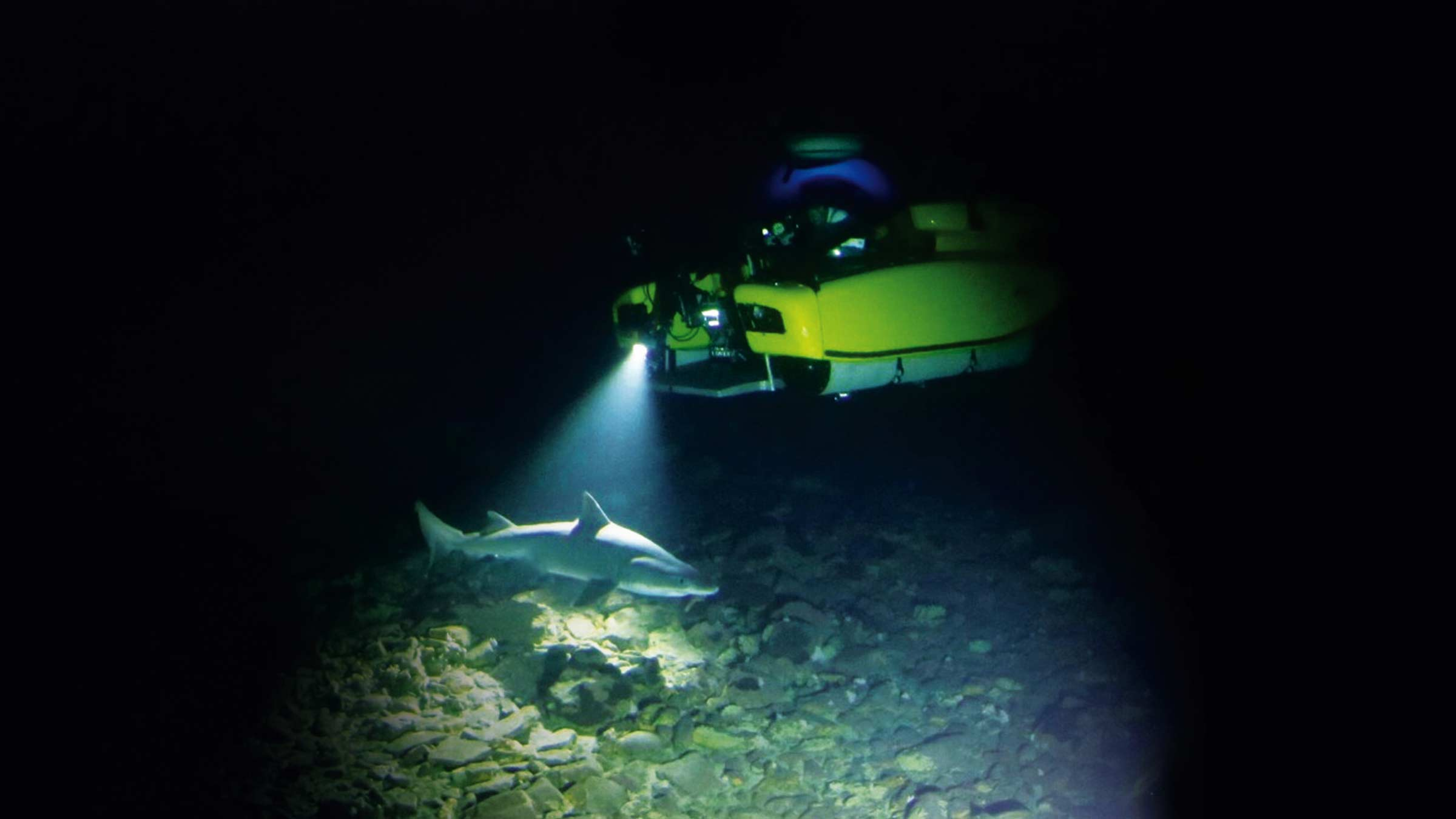 Triton submersible illuminates shark