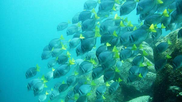Shoal of fish in the Galapagos