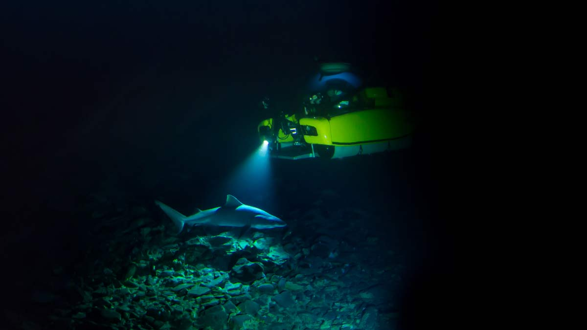 Triton sub films a shark in the dark depths. - Buck Taylor